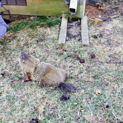 groundhog-control