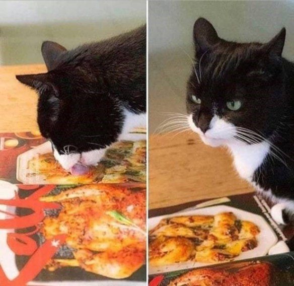 hungry food Cats funny - 9416136192