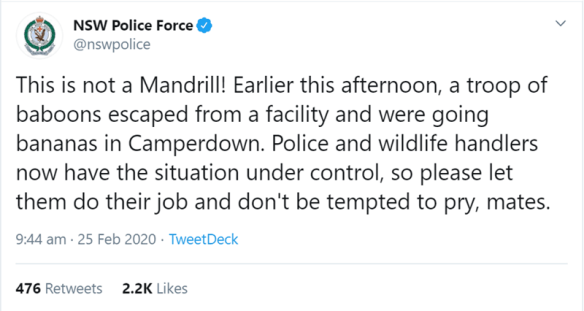 Three Loose Baboons Were Spotted Near a Hospital In Sydney After Escaping From a Scheduled Vasectomy | NSW Police Force @nswpolice This is not Mandrill! Earlier this afternoon troop baboons escaped facility and were going bananas Camperdown. Police and wildlife handlers now have situation under control, so please let them do their job and don't be tempted pry, mates.
