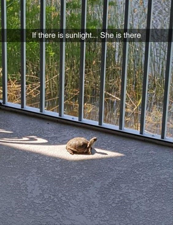 Wildlife - If there is sunlight... She is there