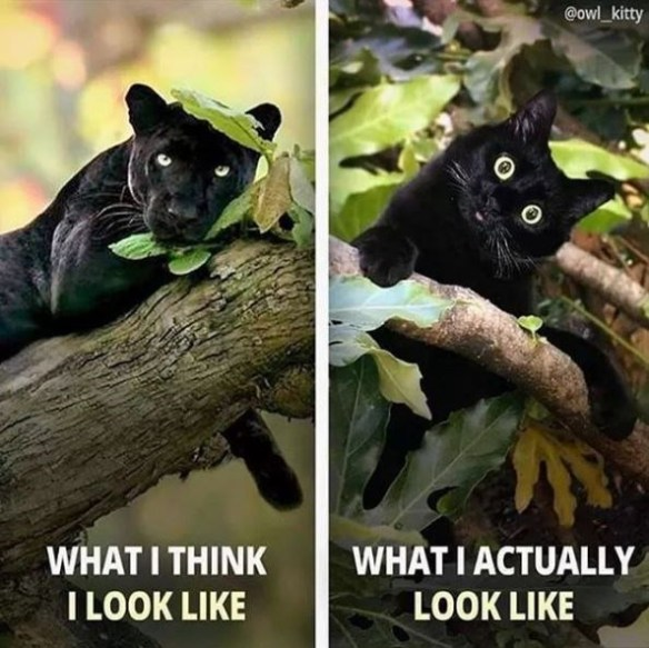 Black cat - @owl_kitty WHAT I THINK I LOOK LIKE WHAT I ACTUALLY LOOK LIKE