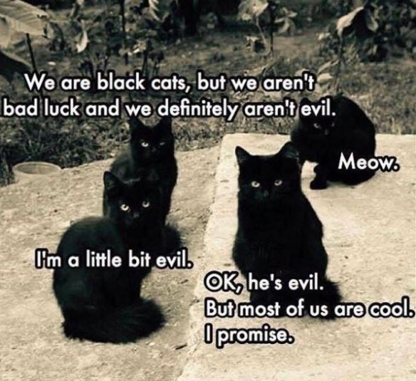 Cat - We are black cats, but we aren't bad luck and we definitely aren't evil. Meow. I'm a little bit evil. OK, he's evil. But most of us are cool. O promise.