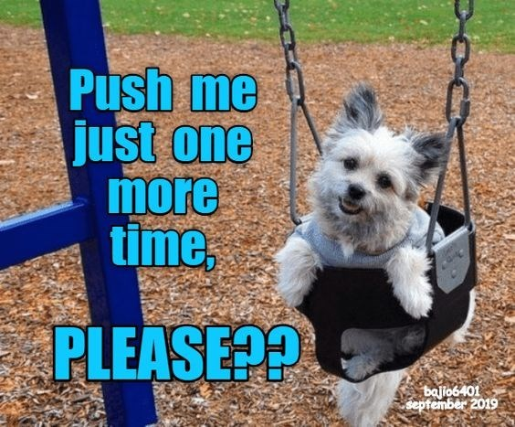 Dog breed - Push me just one more time, PLEASE?? balio6401 september 2019