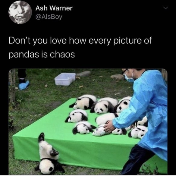 Photo caption - Ash Warner @AlsBoy Don't you love how every picture of pandas is chaos