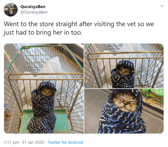 Organism - QuraisyaBen @QuraisyaBen Went to the store straight after visiting the vet so we just had to bring her in too. ININ 1:11 pm · 31 Jan 2020 · Twitter for Android