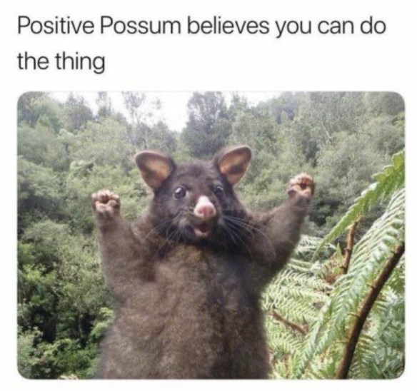 Adaptation - Positive Possum believes you can do the thing