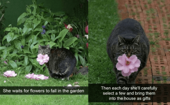 Cat - Then each day she'll carefully select a few and bring them into the house as gifts She waits for flowers to fall in the garden