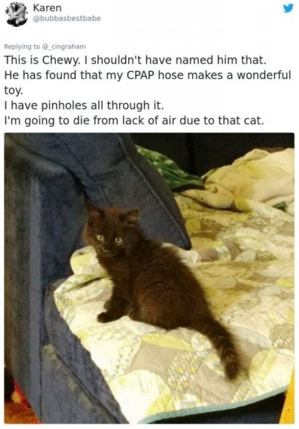 Cat - Karen @bubbasbestbabe Replying to @_cingraham This is Chewy. I shouldn't have named him that. He has found that my CPAP hose makes a wonderful toy. I have pinholes all through it. I'm going to die from lack of air due to that cat.
