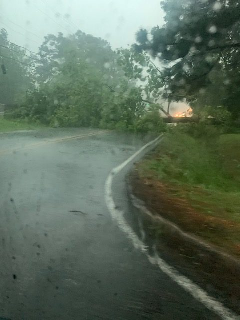 Trees Down on Fairview Ave.
