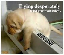 puppy meme: trying desperately to get over wednesday