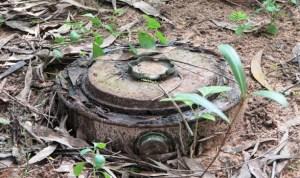 a landmine that looks like a tree trunk