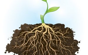 a plant sustained by its roots