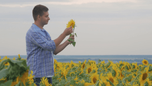 guy looking at one sunflower