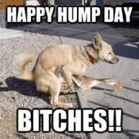 happy hump day, bitches