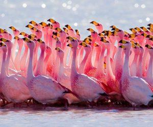 a bunch of flamingos