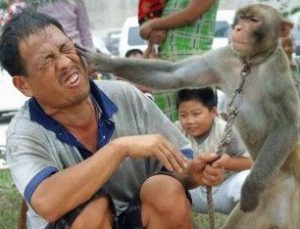 a slap in the face from a monkey