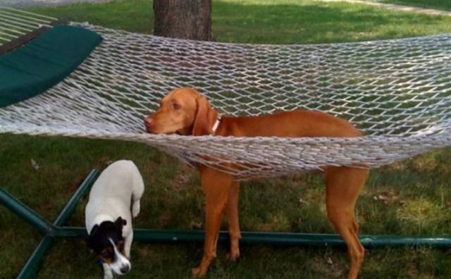 hammock-dog-poor-life-choices[1]