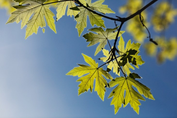 new-leaves