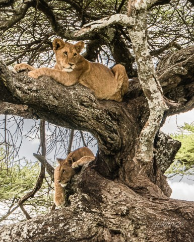 Serengeti National Park, Tanzania. 7 Peer Awards on international website ViewBug.