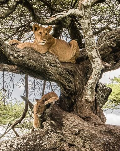 Serengeti National Park, Tanzania. 7 Peer Awards on international website ViewBug.