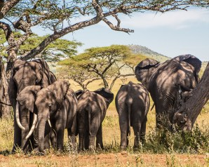 "Tarangire Preserve, Tanzania. Recipient of a ""Superb Composition"" Peer Award on international website viewbug."