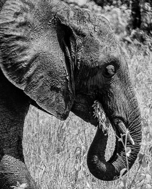 Tarangire National Park, Tanzania.