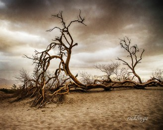 """Mesquite Dunes, Death Valley, California. 9th place award in """"Nature Up Close"""" on international website Pixoto."""