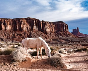 "Monument Valley, Utah. Judges' Commendation in the ""Horses and Ponies"" contest on website Photocrowd. ""Superb Composition"" Peer Award on international website ViewBug."