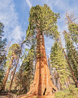 """Sequoia National Park, California. 10th place for the day in """"Nature Up Close"""" on international website Pixoto."""