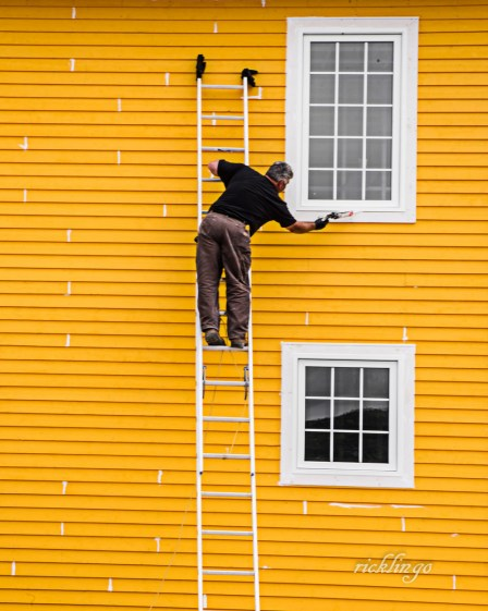 """Trinity, Newfoundland. 6th place award by the Judges in the """"Yellow"""" contest on international website Photocrowd. Judge's comment: """"A well-chosen image in a contest that is about colors. A colored wall and a painter with a brush in his hand. When the painter also stands on a ladder, then the success is at home."""" Judge Commended in """"Minimialism"""" on Photocrowd. 4th in """"People from Behind"""" on Photocrowd."""
