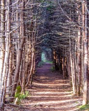Coastal Trail, Gros Morne National Park, Newfoundland.