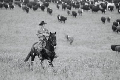 Cowboy Riding Herd