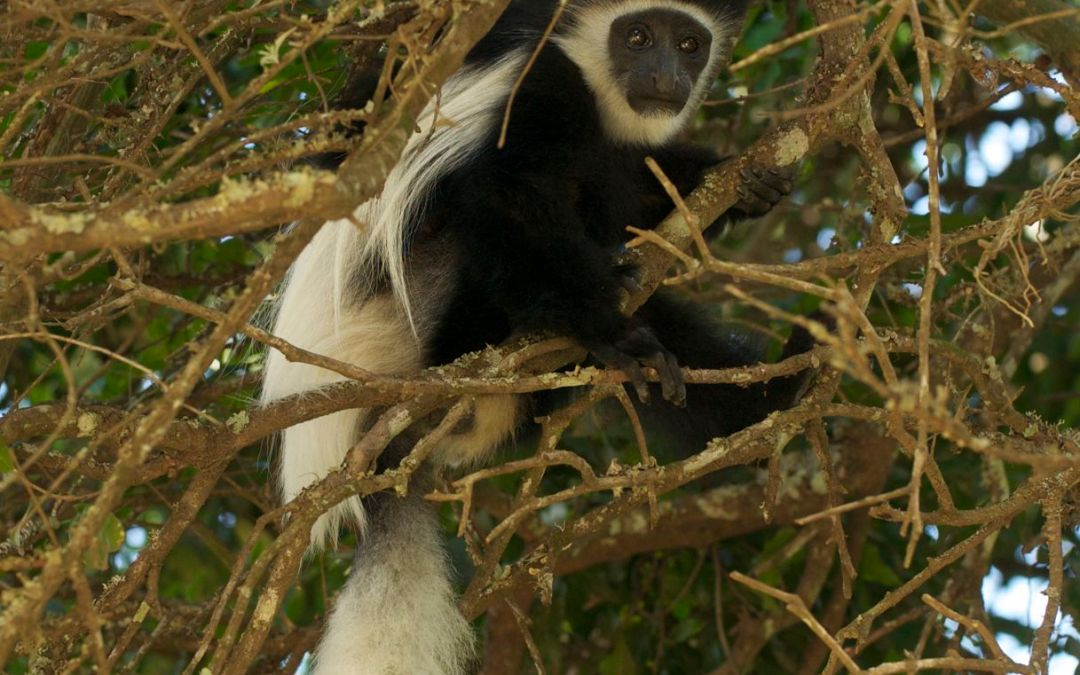 Keeping the Monkeys Where They Belong: Leadership Lesson Part 5