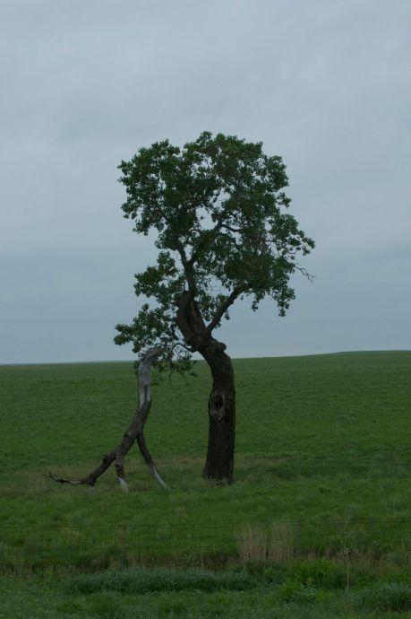 Dinosaur Tree 1