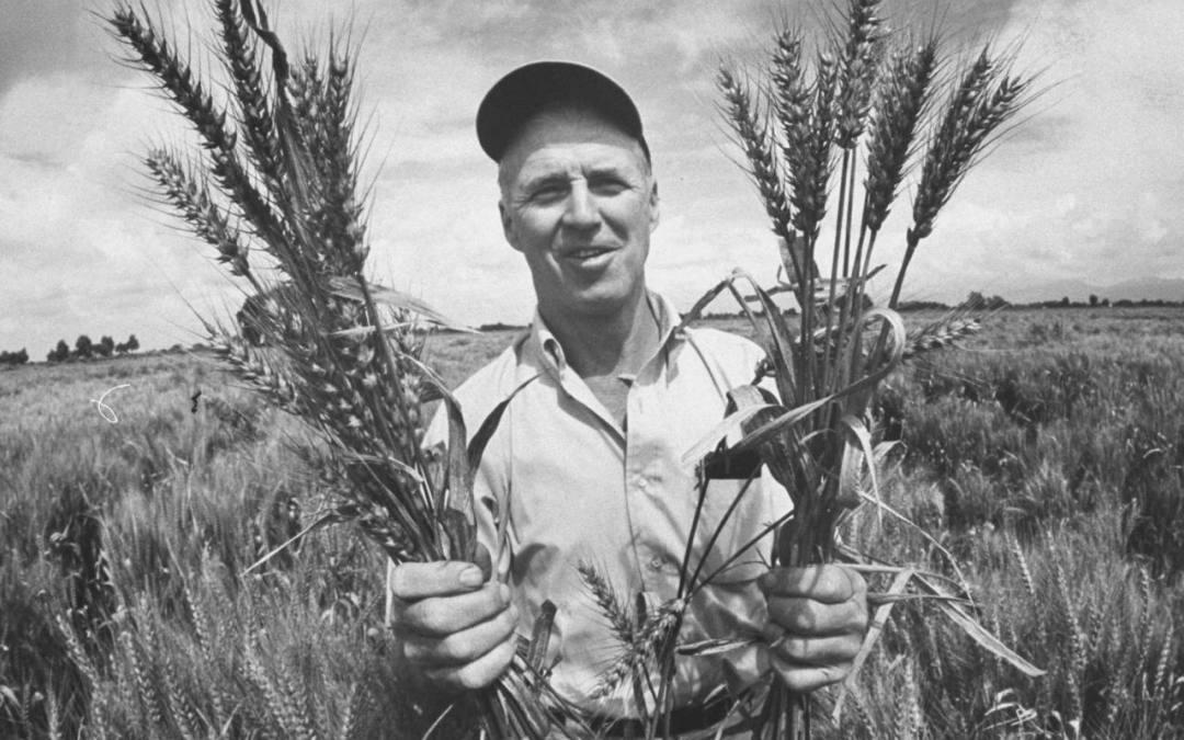 How a Little Curiosity Fed the World: Dr. Norman Borlaug