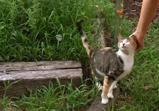 Leaning in to Love: A Feral Cat Becomes Our Pet