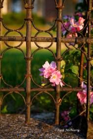 Iron Flowers