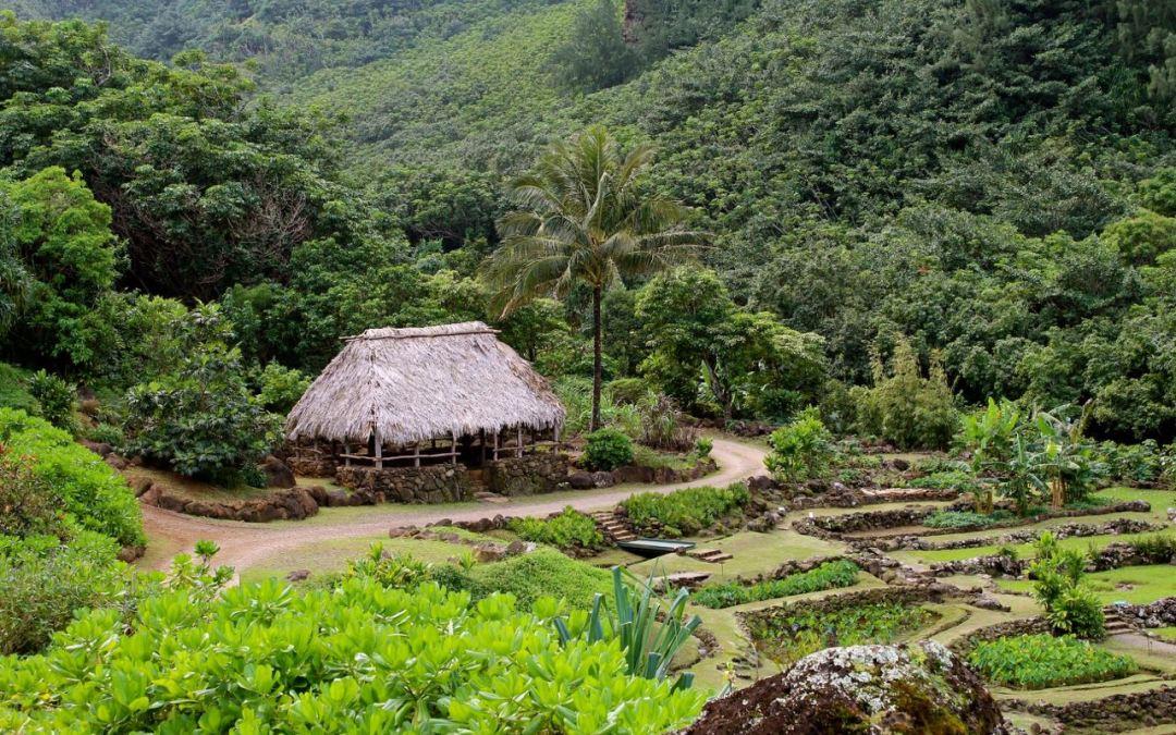 Photographing Limahuli Garden: A Travel Journal of Kauai