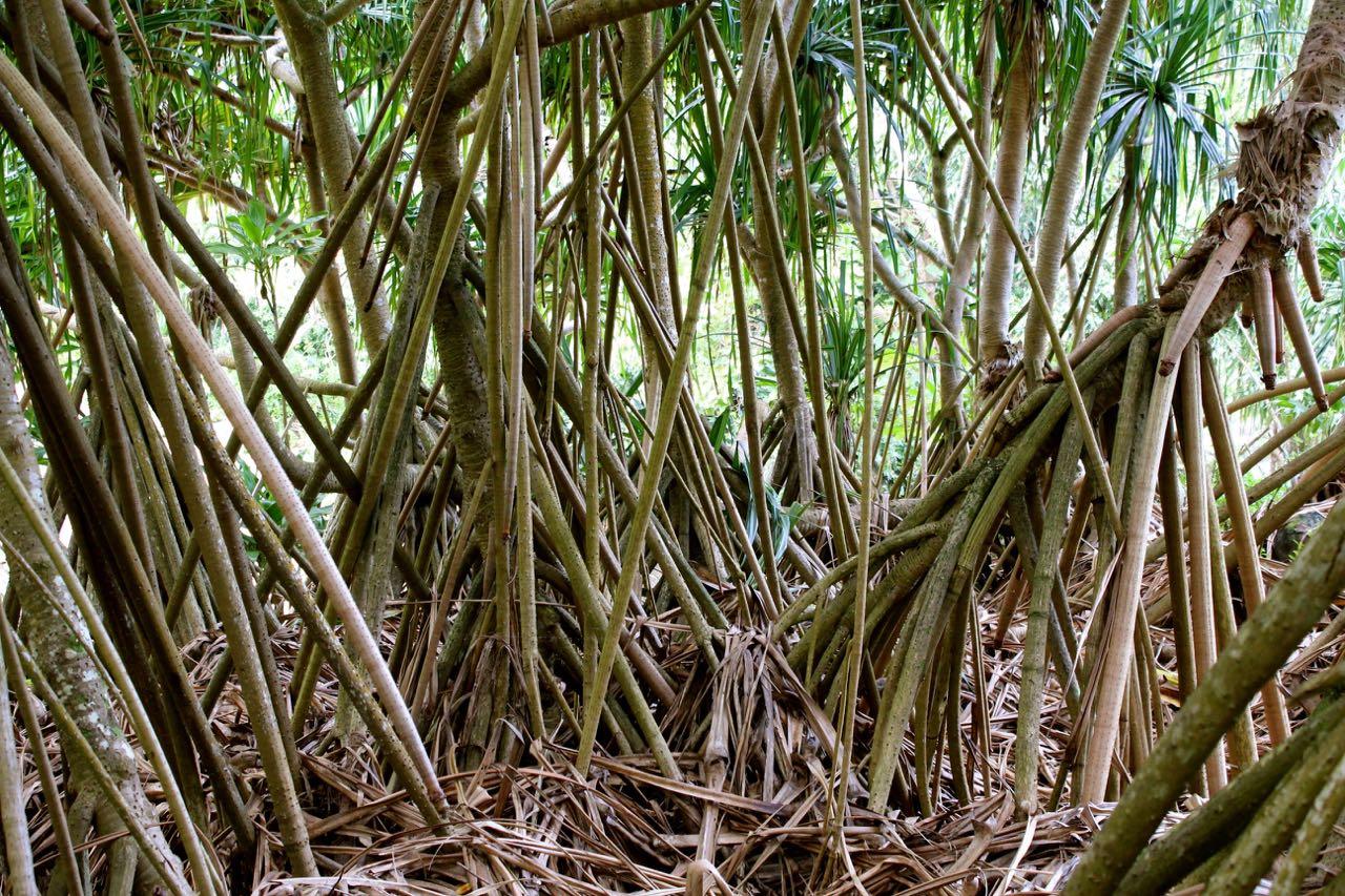 Photographing Limahuli Garden: A Travel Journal of Kauai | Rick McNary
