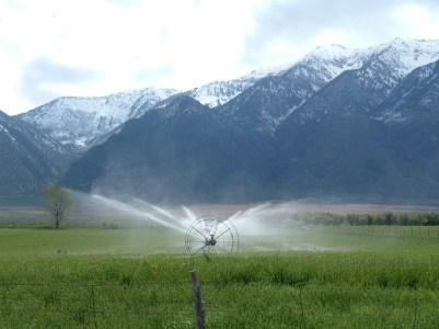 Sprinklers, Meadows & Mountains