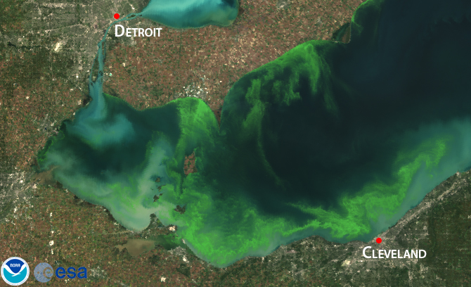 Linking Invasive Mussels to Algal Blooms