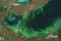 lake erie algal blooms