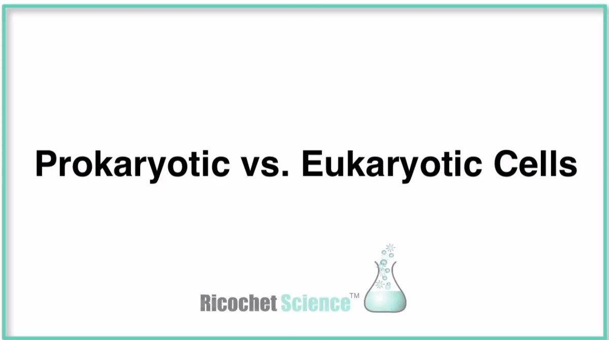 Video: Prokaryotic versus Eukaryotic Cells