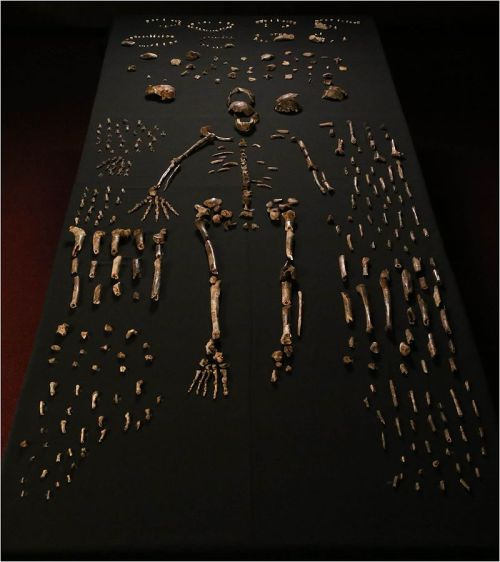 Homo Naledi Body