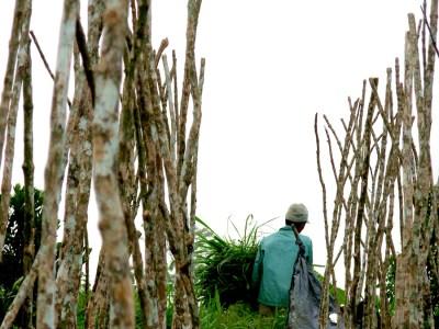 bedugal farmer
