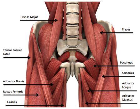 Male groin anatomy