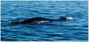 Wale, Ensenada