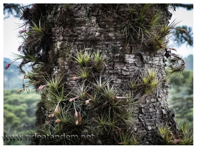 Baumpflanzen