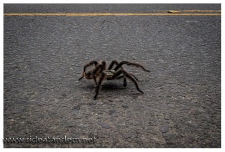"""Auf einem netten Anstieg plötzlich auf unserer Strasse. Keine Ahnung ob giftig oder nicht, in jedem Fall """"Tier des Tages"""""""