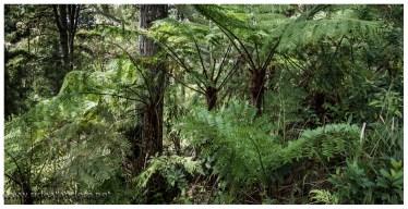 Es ist verdammt grün hier, teilweise wirkt es wie im Urwald, roter Boden, grüner Wald
